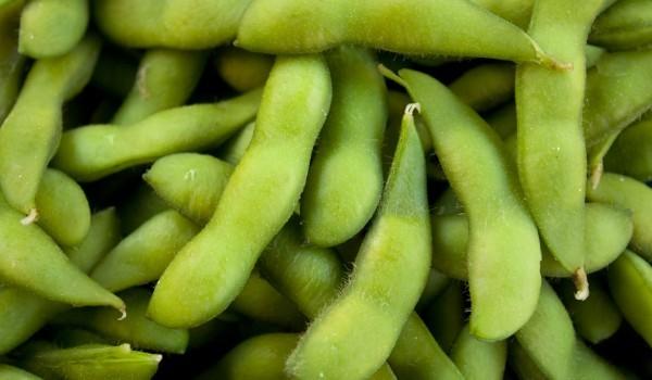 Задушен зелен фасул